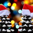 Programme des animations pour tous fin d'année