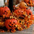 Pour les vacances d'automne, l'ASCA a prévu un programme spécialement […]